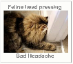 Feline head pressing - bad headache