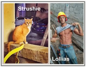 Strushie the cat killed by Lollias the Greek