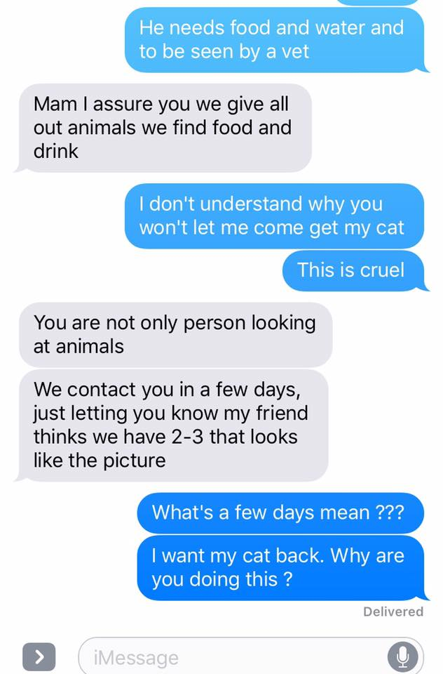Text messages concerning lost cat and his recovery