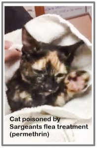 Cat poisoned by Sergeants flea treatment