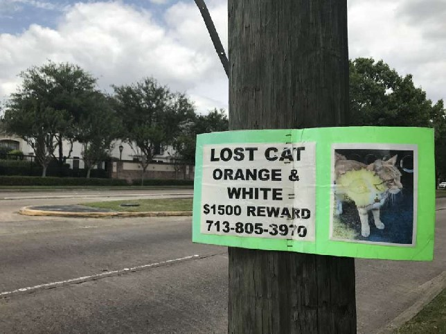 Lost cat poster with large reward