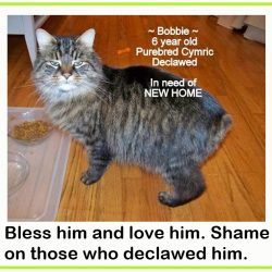 Cat shelters shun declawing