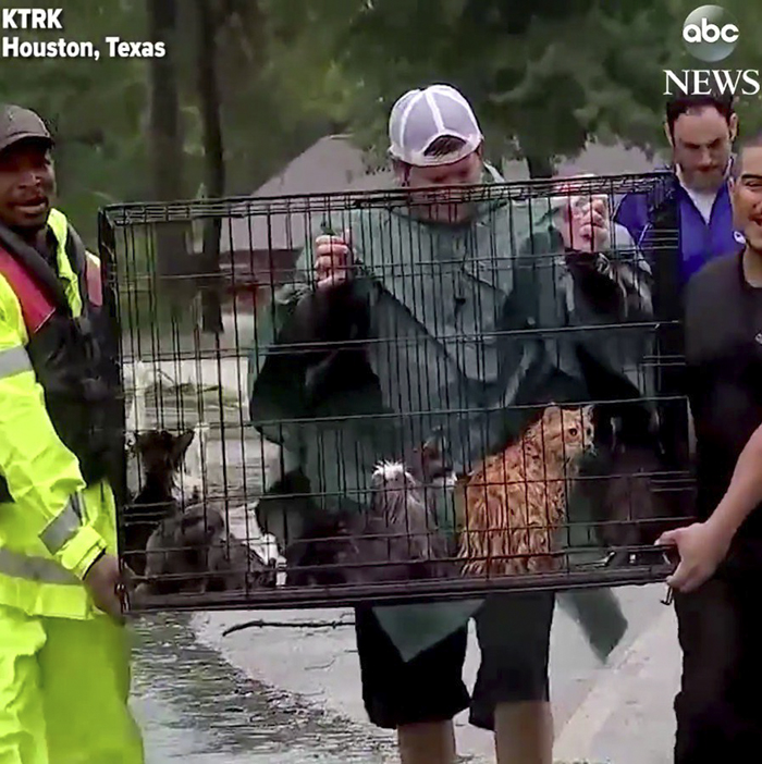 Hurricane Harvey rescued cats