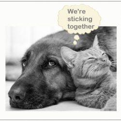 Pets in divorce