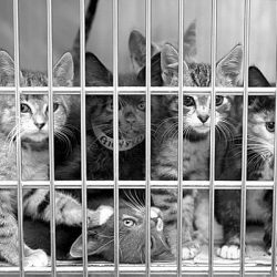 Animal Shelter Cats
