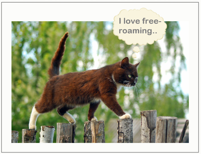 Domestic cats love free-roaming