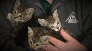 Cute rescue kittens found in car compartment