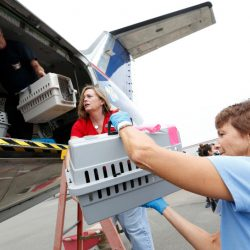 Cats an dogs being loaded onto Wings of Rescue plane to be flown to California ahead of Irma (Photo: Jane Tyska/Bay Area News Group)