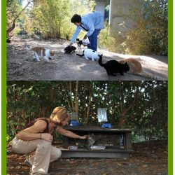 Feral cat colony caretakers are usually women