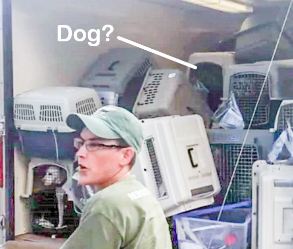 Irma hurricane rescue dog in crate in lorry