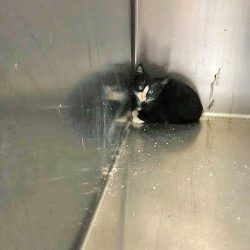 Little kitten in corner of cage at animal shelter looking scared