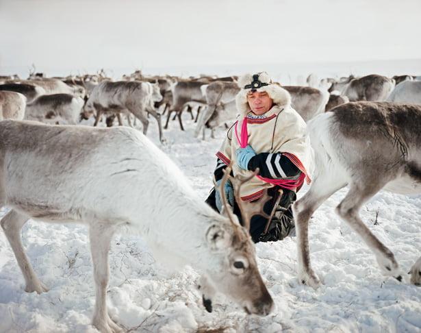 Sami reindeer herder