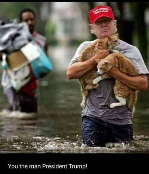 President Trump rescues cats from floodwater