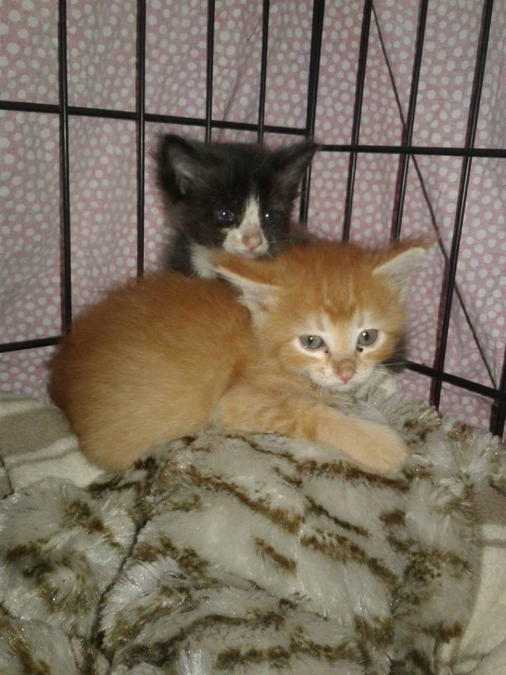 Two kittens rescued from factory where adult cats were allegedly being cruelly killed