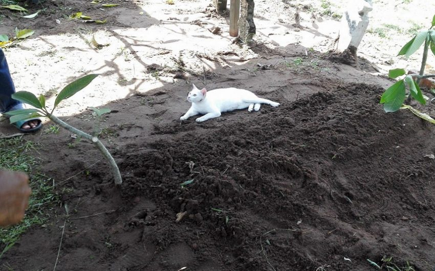 Video of cat at man's grave goes viral