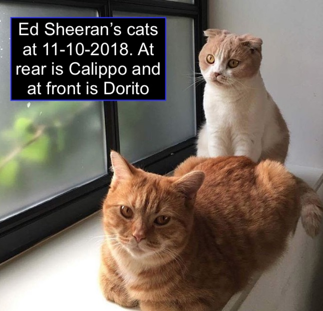 Ed Sheeran's cats