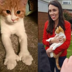 Jacinda Ardern and cat Paddles