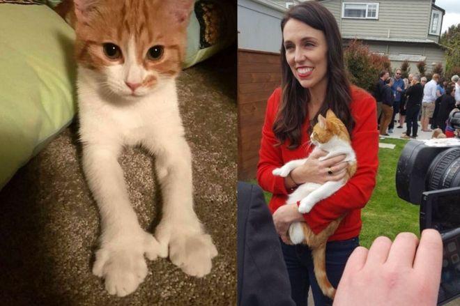 Jacinda Ardern and cat Paddles