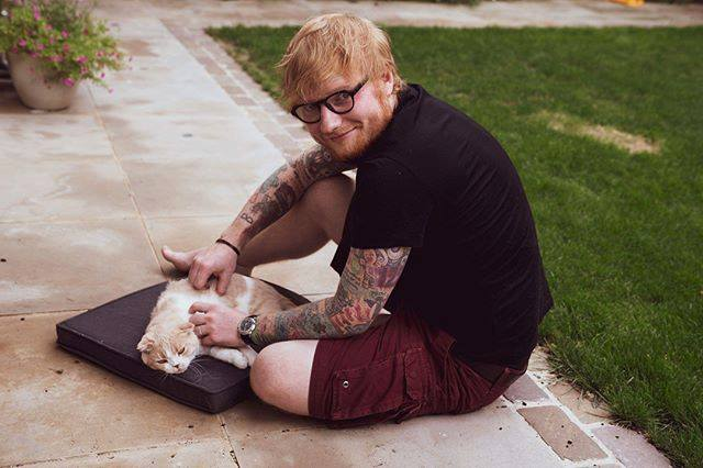 Picture of Ed Sheeran and cat