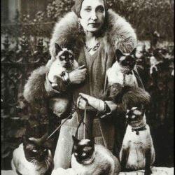 Siamese cat lady