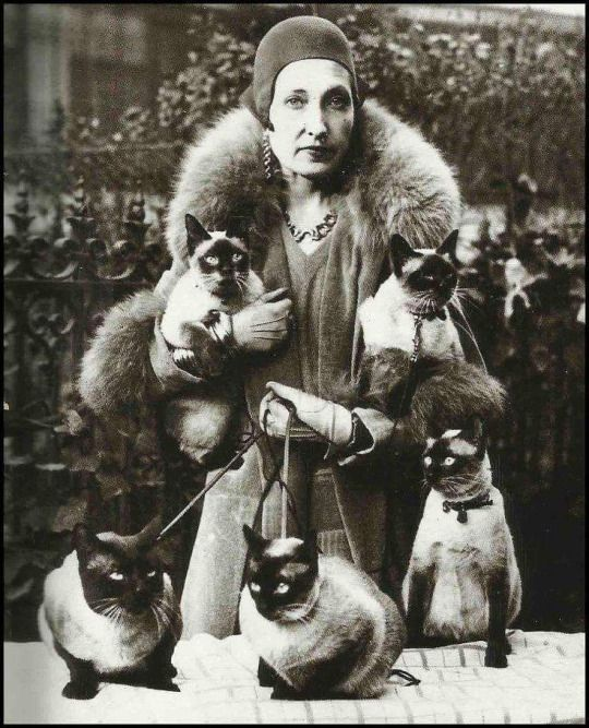 Siamese cat lady