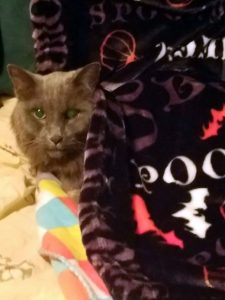 Were you attacked on social media after deciding to euthanize or not to euthanize your cat?