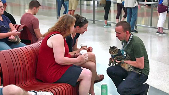 Airport therapy cat Xeli at Denver Airport