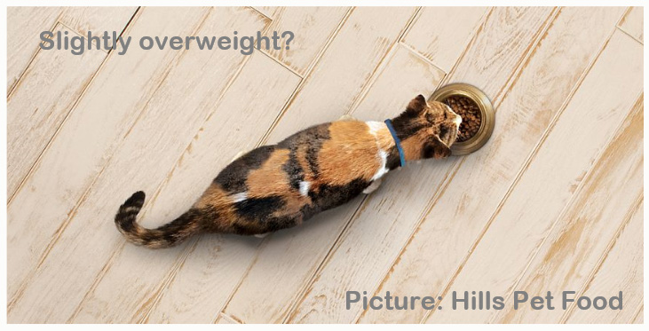 Calorie intake for a cat to lose weight