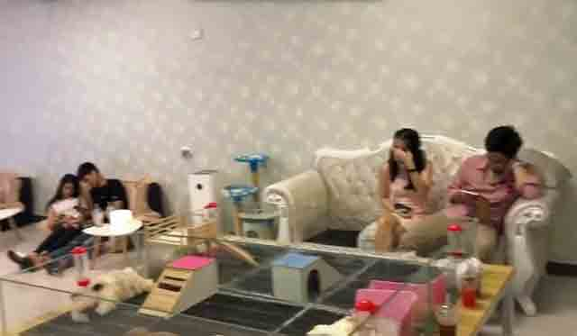 Cat cafe in Bangkok owned by convicted animal abuser