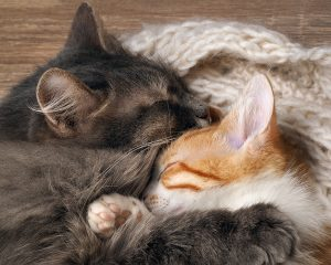Indoor cats are better in pairs provided they are good friends.
