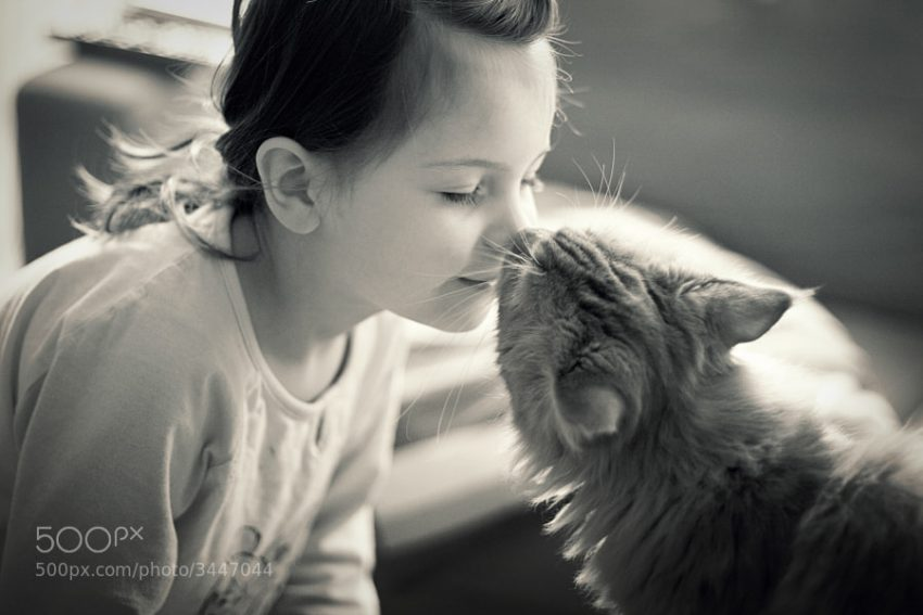 Cat sniffing human