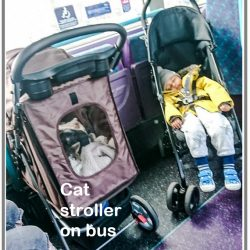 Cat stroller on bus caused toddler in pram to stand