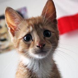 Do cats understand death?