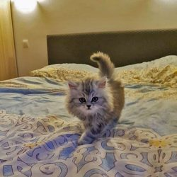 First cat he owned was this angelic kitten