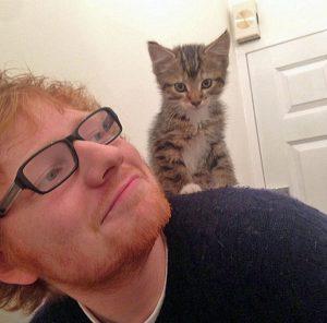 How many cats does Ed Sheeran have?