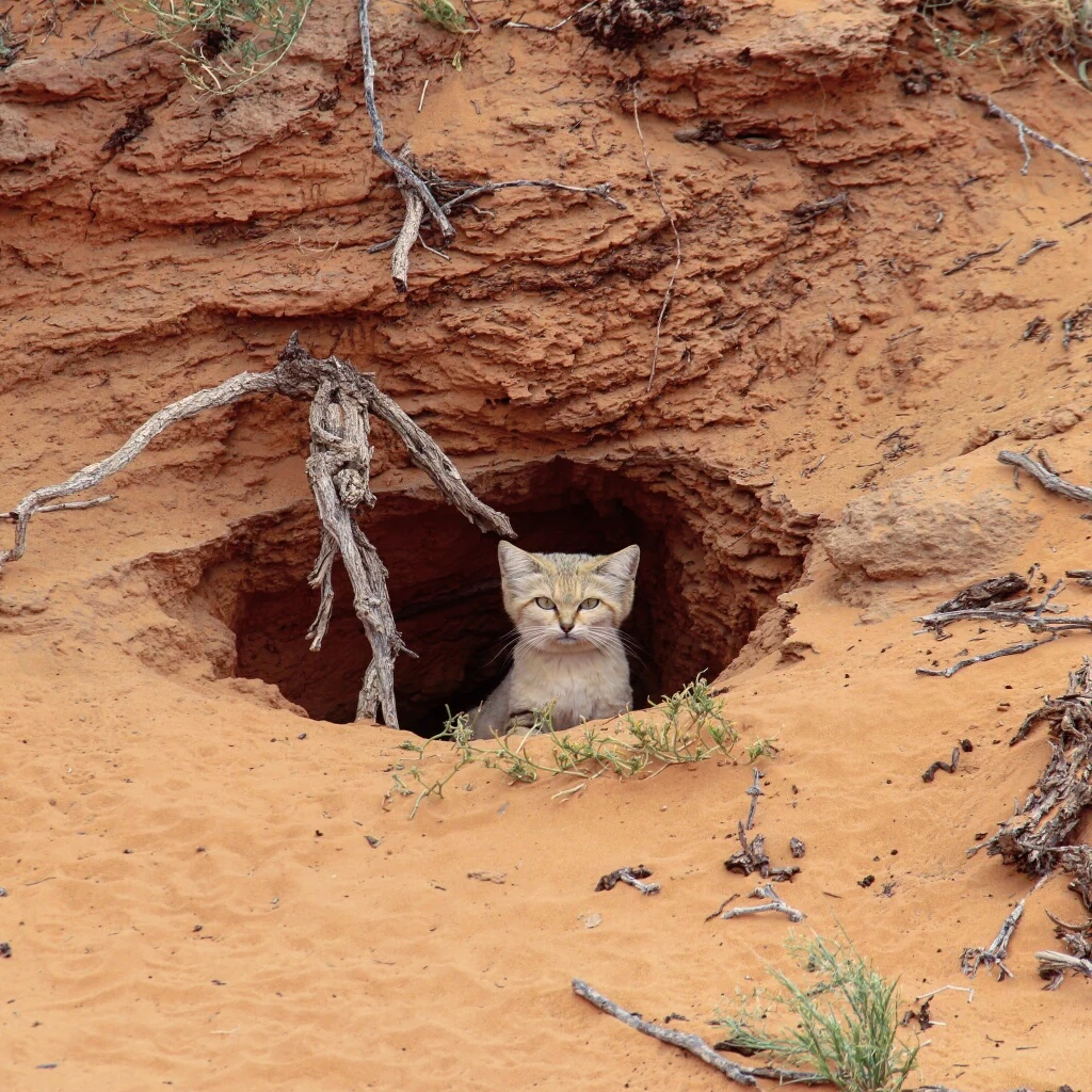 Sand cat burrow