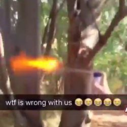 Squirrel blow torched