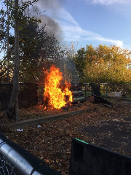 Arsonists burn down cat shelter