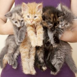 Woman and kittens