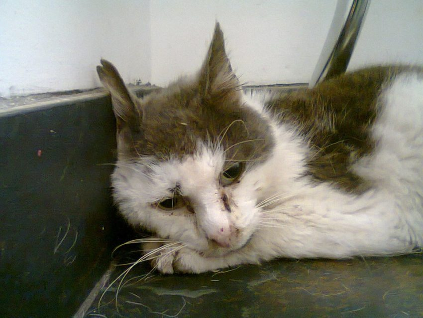 'Ted' a feral cat being cared for