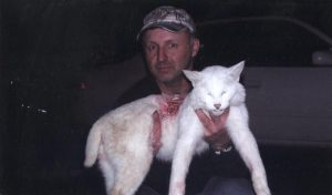 Albino bobcat hunted to death in America
