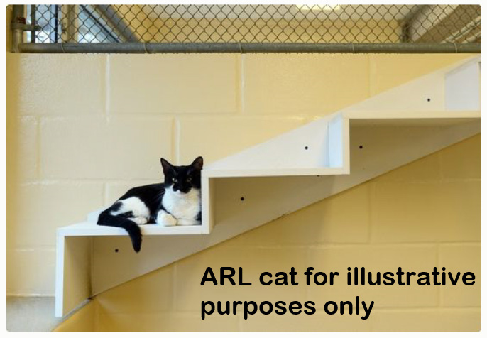 ARL cat