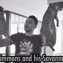 Ben Simmons and his Savannah cats