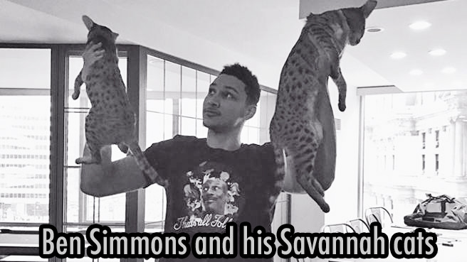 Ben Simmons and his Savannah cats