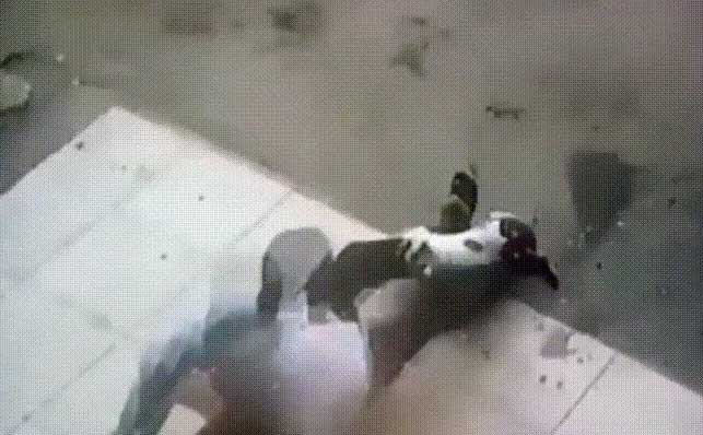 cat attacks man in Egypt or not?