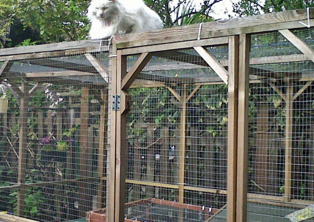Catio for blind cats in London