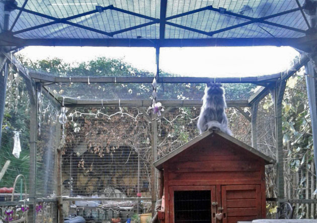 Catio for blind cats