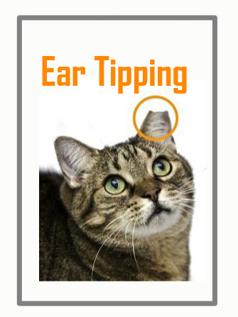 Ear tipping is not cruel
