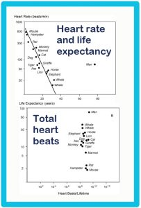 Heart rate and lifespan charts