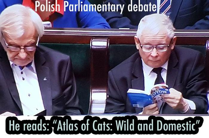 Polish politician reads cat book in Parliament during debate